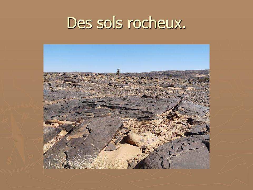 Des sols rocheux.