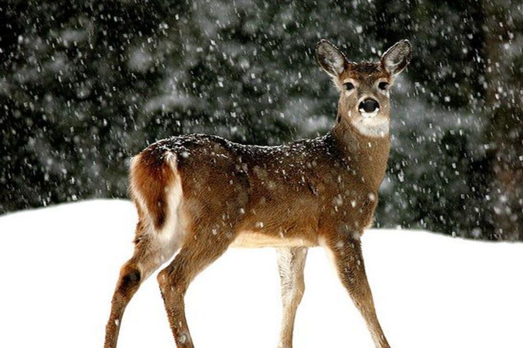 Création vero57 C'est beau la neige