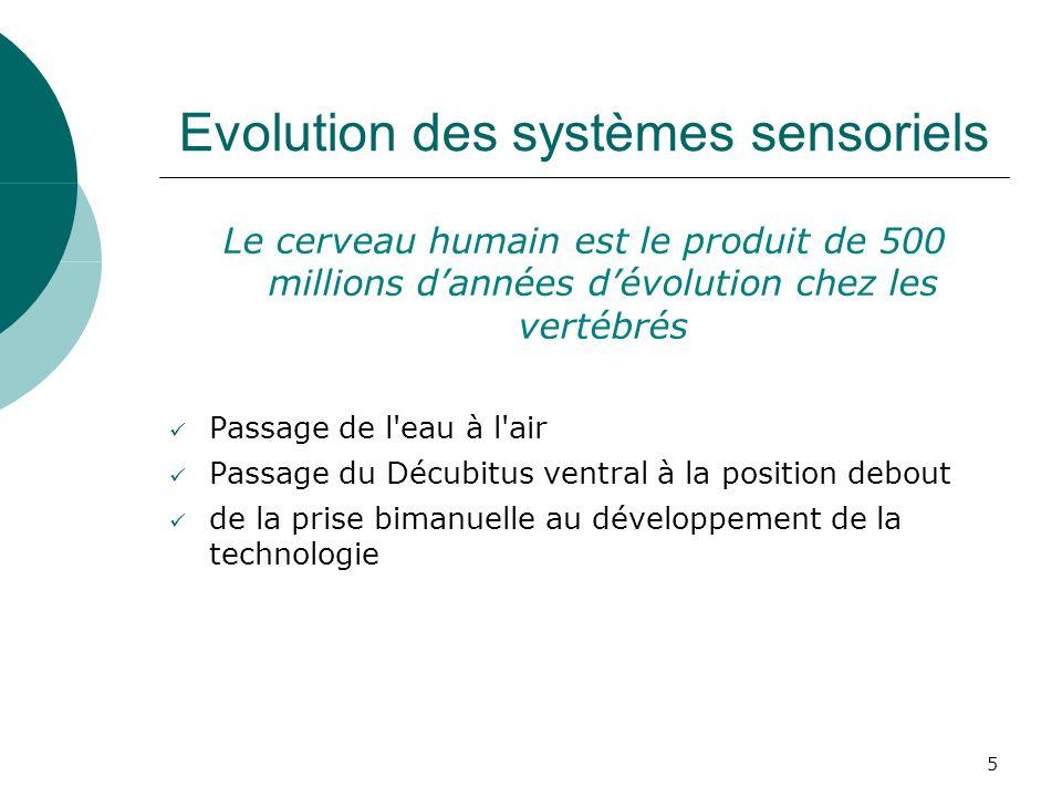 5 Evolution des systèmes sensoriels Le cerveau humain est le produit de 500 millions dannées dévolution chez les vertébrés Passage de l'eau à l'air Pa