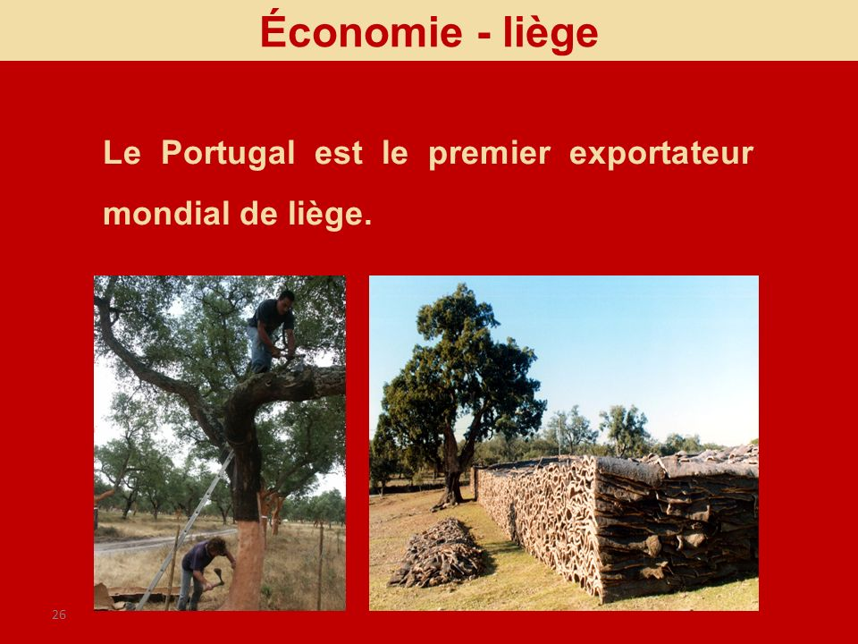 26 Le Portugal est le premier exportateur mondial de liège. Économie - liège