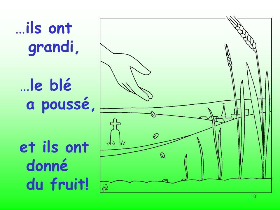 10 …ils ont grandi, …le blé a poussé, et ils ont donné du fruit!
