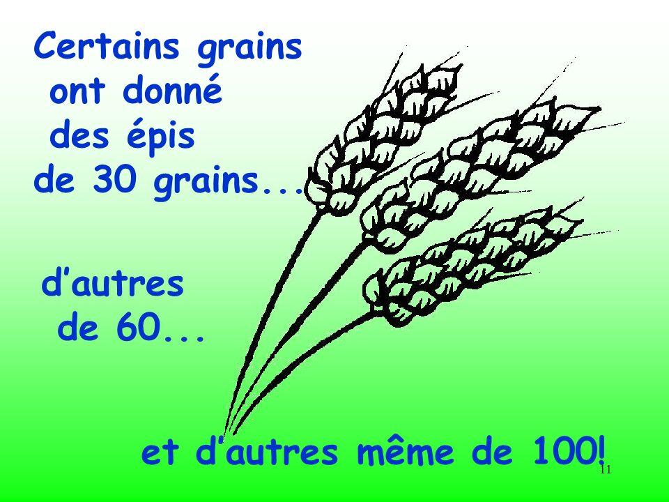11 Certains grains ont donné des épis de 30 grains... et dautres même de 100! dautres de 60...