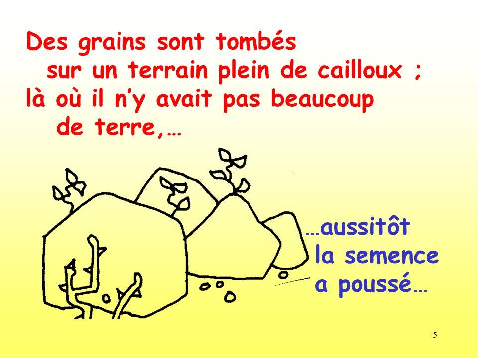 5 Des grains sont tombés sur un terrain plein de cailloux ; là où il ny avait pas beaucoup de terre,… …aussitôt la semence a poussé…