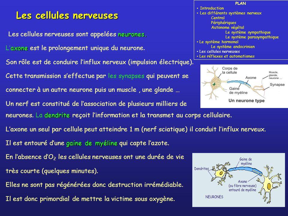neurones.Les cellules nerveuses sont appelées neurones.
