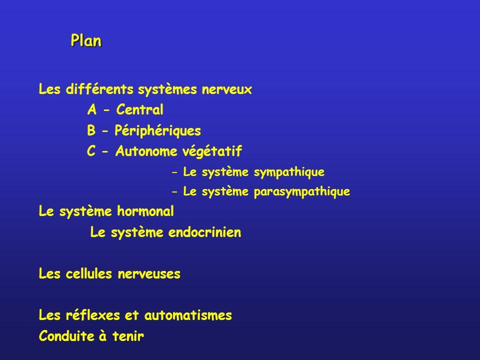 Plan Les différents systèmes nerveux A - Central B - Périphériques C - Autonome végétatif - Le système sympathique - Le système parasympathique Le système hormonal Le système endocrinien Les cellules nerveuses Les réflexes et automatismes Conduite à tenir