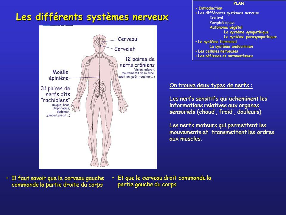 Les différents systèmes nerveux PLAN Introduction Les différents systèmes nerveux Central Périphériques Autonome végétal Le système sympathique Le système parasympathique Le système hormonal Le système endocrinien Les cellules nerveuses Les réflexes et automatismes Système Nerveux Central – SNC _________________________ Encéphale, moelle épinière Système Nerveux périphérique – SNP _____________________________ Nerfs crâniens, nerfs rachidiens MUSCLES _____________________________ ORGANES SENSORIELS envoi dordres réception dinformations nerfs moteurs nerfs sensitifs Système Nerveux Autonome – SNA (ou végétatif) SYMPATHIQUE Situations de stress ou déveil, gestion des organes de défense de lorganisme PARASYMPATHIQUE Activités volontaires en situation de paix ou repos, gestion du processus de digestion ORGANES _____________________________ GLANDES Ex : capteurs au niveau de la peau Ex : marcher Ex : fonctions digestives, cœur, reins,...