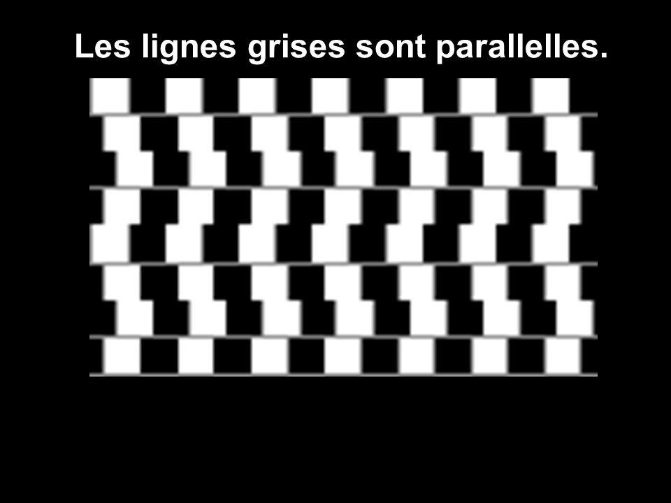 Les lignes grises sont parallelles.