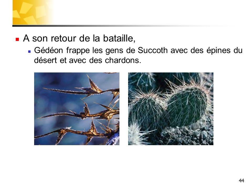 44 A son retour de la bataille, Gédéon frappe les gens de Succoth avec des épines du désert et avec des chardons.