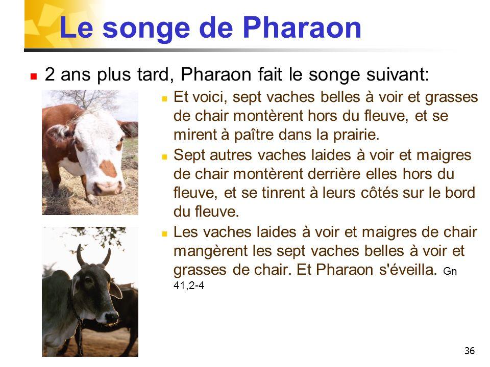 36 Le songe de Pharaon 2 ans plus tard, Pharaon fait le songe suivant: Et voici, sept vaches belles à voir et grasses de chair montèrent hors du fleuv