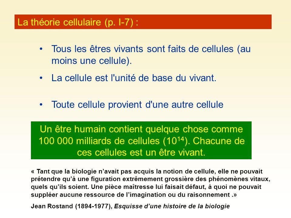 La théorie cellulaire (p. I-7) : Tous les êtres vivants sont faits de cellules (au moins une cellule). La cellule est l'unité de base du vivant. Un êt