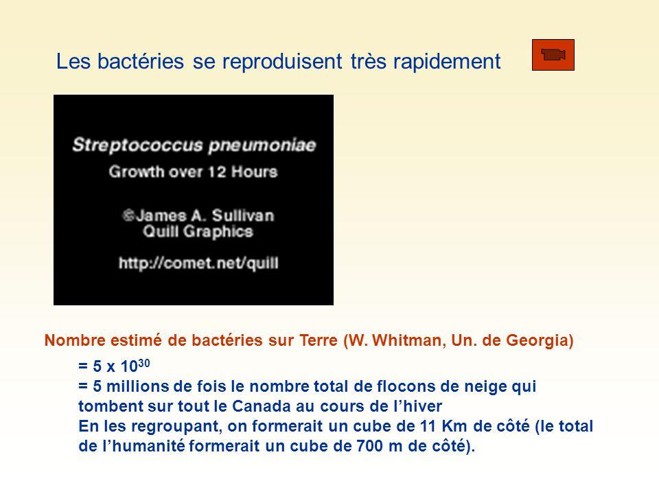 Les bactéries se reproduisent très rapidement Nombre estimé de bactéries sur Terre (W. Whitman, Un. de Georgia) = 5 x 10 30 = 5 millions de fois le no