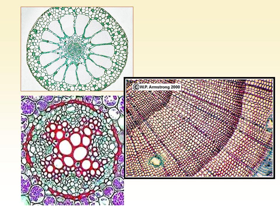 Les atomes sont constitués dun noyau très compact entouré dun nuage délectrons.