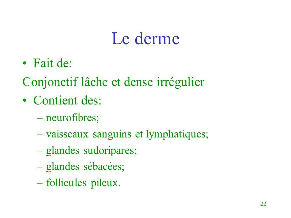 22 Le derme Fait de: Conjonctif lâche et dense irrégulier Contient des: –neurofibres; –vaisseaux sanguins et lymphatiques; –glandes sudoripares; –glan