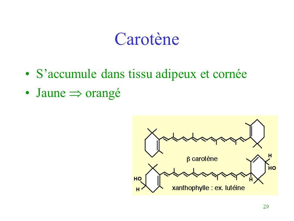 29 Carotène Saccumule dans tissu adipeux et cornée Jaune orangé