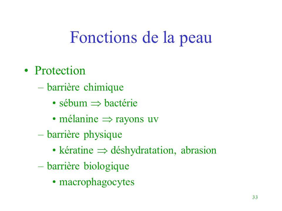 33 Fonctions de la peau Protection –barrière chimique sébum bactérie mélanine rayons uv –barrière physique kératine déshydratation, abrasion –barrière