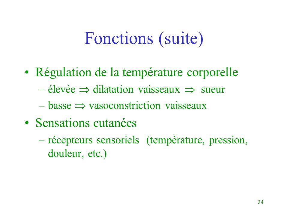 34 Fonctions (suite) Régulation de la température corporelle –élevée dilatation vaisseaux sueur –basse vasoconstriction vaisseaux Sensations cutanées