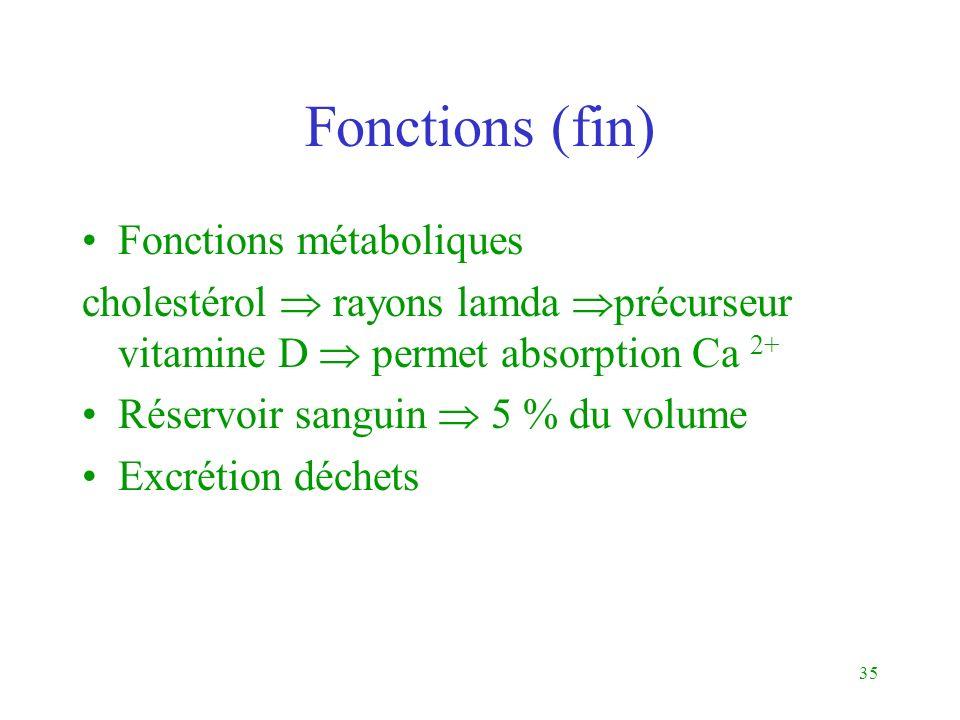 35 Fonctions (fin) Fonctions métaboliques cholestérol rayons lamda précurseur vitamine D permet absorption Ca 2+ Réservoir sanguin 5 % du volume Excré