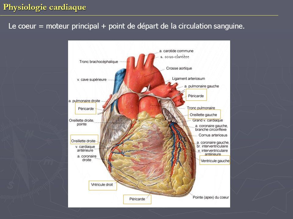 Physiologie cardiaque Propriétés physiologiques : Vitesse de conduction = Effet dromotrope Excitabilité = Effet bathmotrope(tension) Distensibilité = Effet tonotrope Fréquence = Effet chronotrope(commande la régularité dun rythme) Force de contraction =Effet ionotrope Automaticité La contraction des fibres myocardiques dépend de la loi du tout ou rien Influence de la charge au niveau du myocarde et du cœur entier - Précharge : force exercée sur le myocarde avant létirement des fibres - Postcharge : force exercée sur la myocarde pendant la contraction