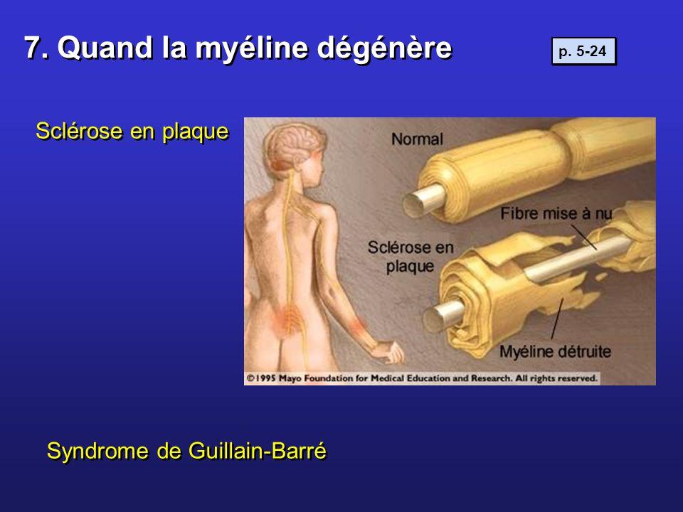 7. Quand la myéline dégénère Sclérose en plaque Syndrome de Guillain-Barré p. 5-24