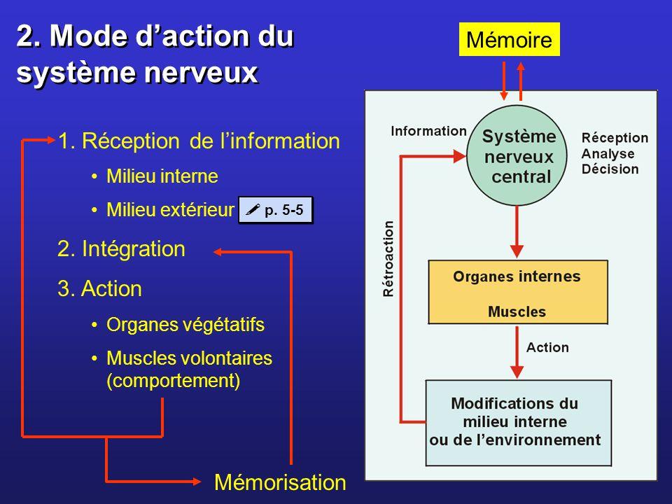 2. Mode daction du système nerveux 1. Réception de linformation Milieu interne Milieu extérieur 2. Intégration 3. Action Organes végétatifs Muscles vo