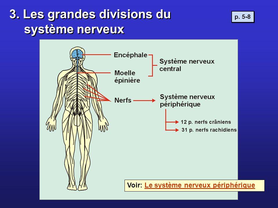 3. Les grandes divisions du système nerveux Voir: Le système nerveux périphériqueLe système nerveux périphérique p. 5-8