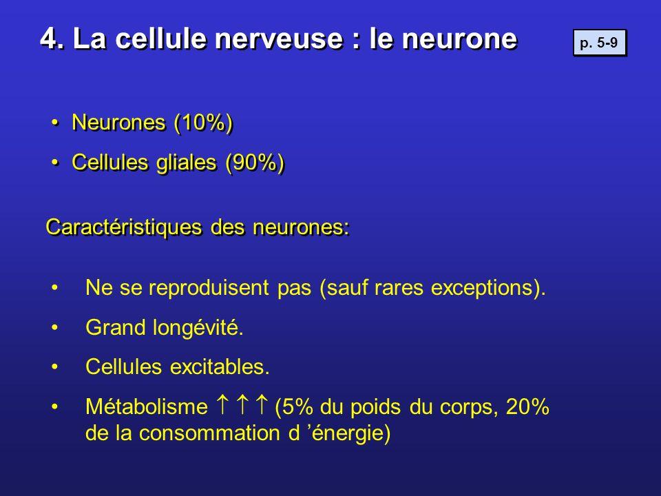 4. La cellule nerveuse : le neurone Neurones (10%) Cellules gliales (90%) Neurones (10%) Cellules gliales (90%) Ne se reproduisent pas (sauf rares exc