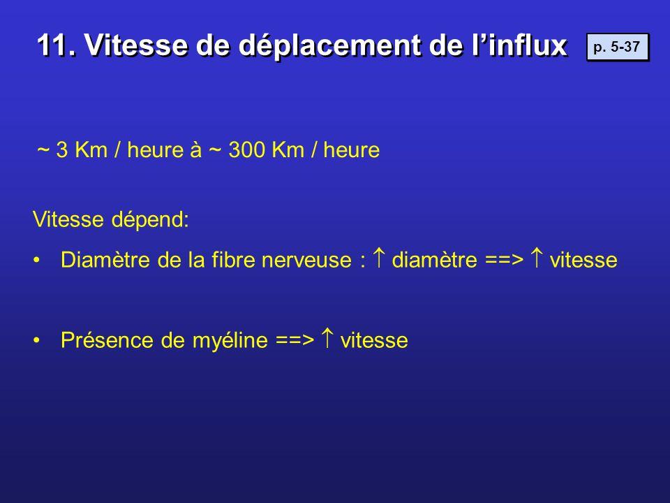 ~ 3 Km / heure à ~ 300 Km / heure Vitesse dépend: Diamètre de la fibre nerveuse : diamètre ==> vitesse Présence de myéline ==> vitesse 11. Vitesse de