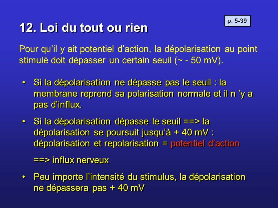 12. Loi du tout ou rien Pour quil y ait potentiel daction, la dépolarisation au point stimulé doit dépasser un certain seuil (~ - 50 mV). Si la dépola