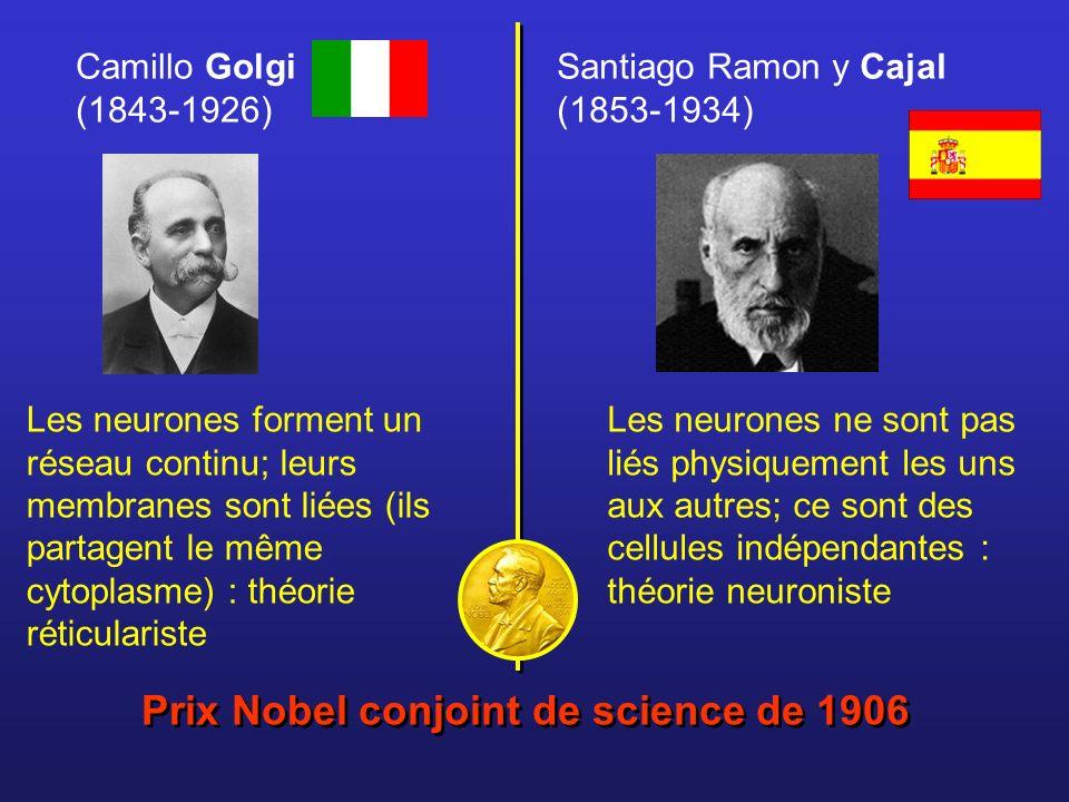 Santiago Ramon y Cajal (1853-1934) Camillo Golgi (1843-1926) Prix Nobel conjoint de science de 1906 Les neurones forment un réseau continu; leurs memb