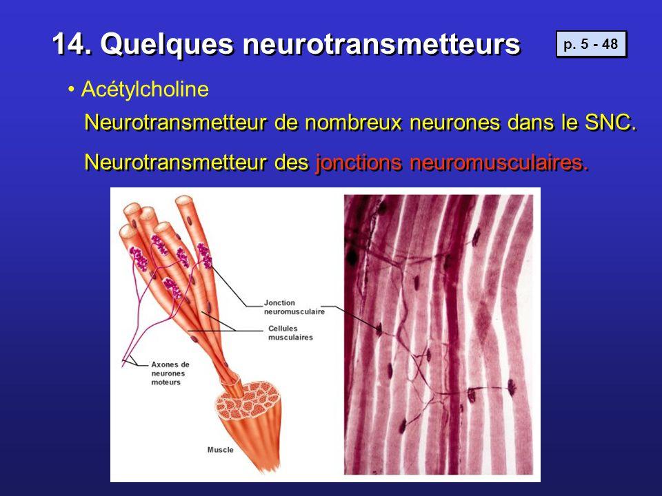 14. Quelques neurotransmetteurs Acétylcholine Neurotransmetteur de nombreux neurones dans le SNC. Neurotransmetteur des jonctions neuromusculaires. Ne