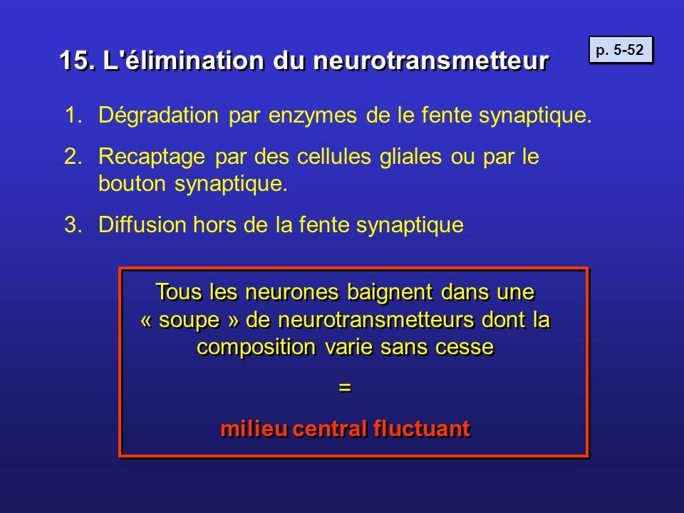 1.Dégradation par enzymes de le fente synaptique. 2.Recaptage par des cellules gliales ou par le bouton synaptique. 3.Diffusion hors de la fente synap