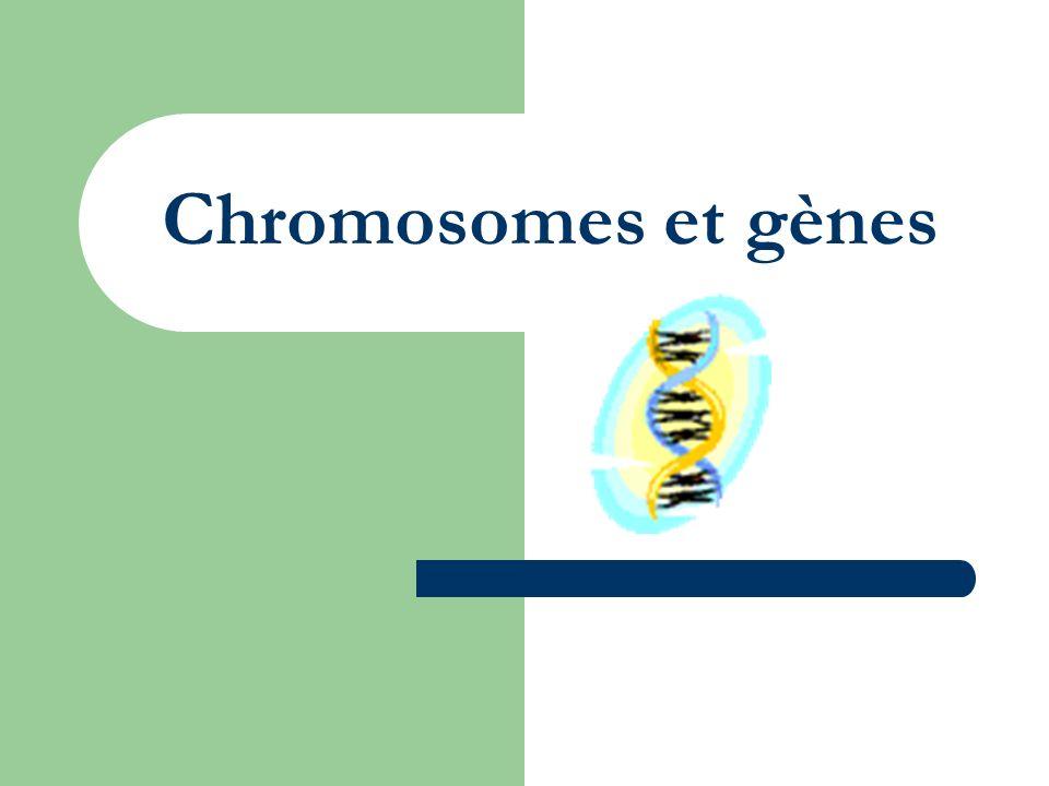 Chromosomes et gènes