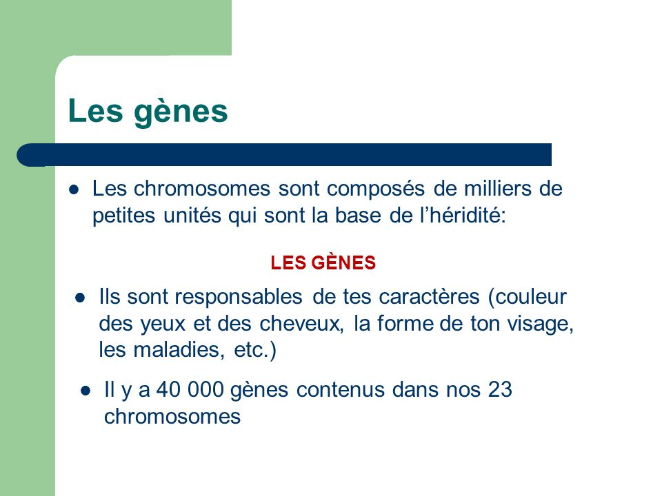 Les gènes Les chromosomes sont composés de milliers de petites unités qui sont la base de lhéridité: LES GÈNES Ils sont responsables de tes caractères (couleur des yeux et des cheveux, la forme de ton visage, les maladies, etc.) Il y a 40 000 gènes contenus dans nos 23 chromosomes