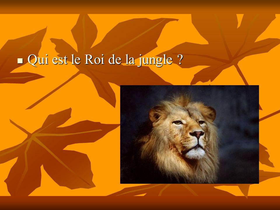 Qui est le Roi de la jungle ? Qui est le Roi de la jungle ?
