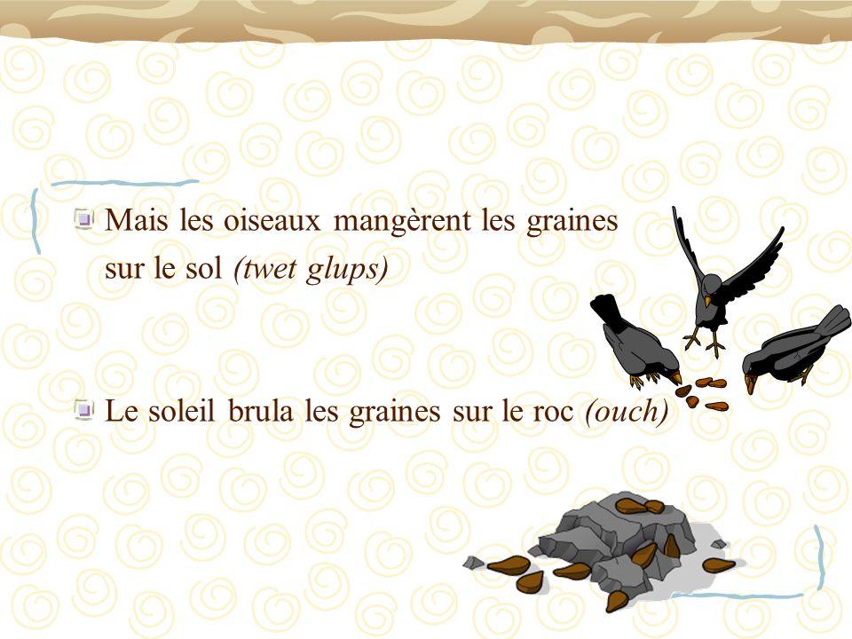 Mais les oiseaux mangèrent les graines sur le sol (twet glups) Le soleil brula les graines sur le roc (ouch)