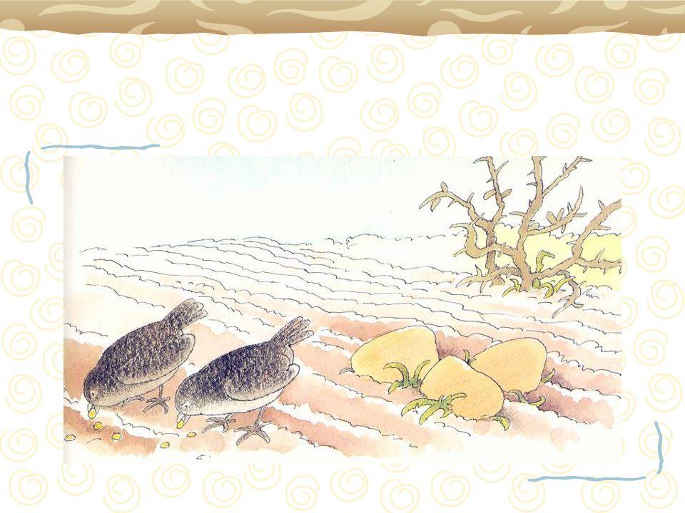Le semeur (le semeur) Sortit semer (sortit semer) Planter des graines (planter des graines) En espérant quelles poussent (en espérant quelles poussent)