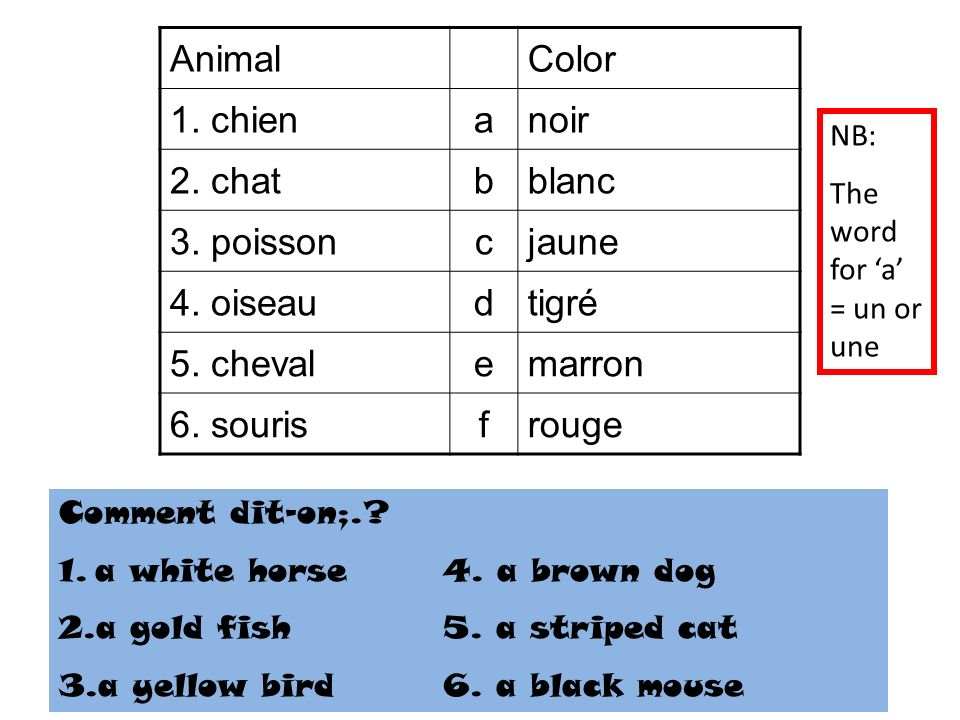 AnimalColor 1. chienanoir 2. chatbblanc 3. poissoncjaune 4. oiseaudtigré 5. chevalemarron 6. sourisfrouge Comment dit-on;.? 1.a white horse4. a brown