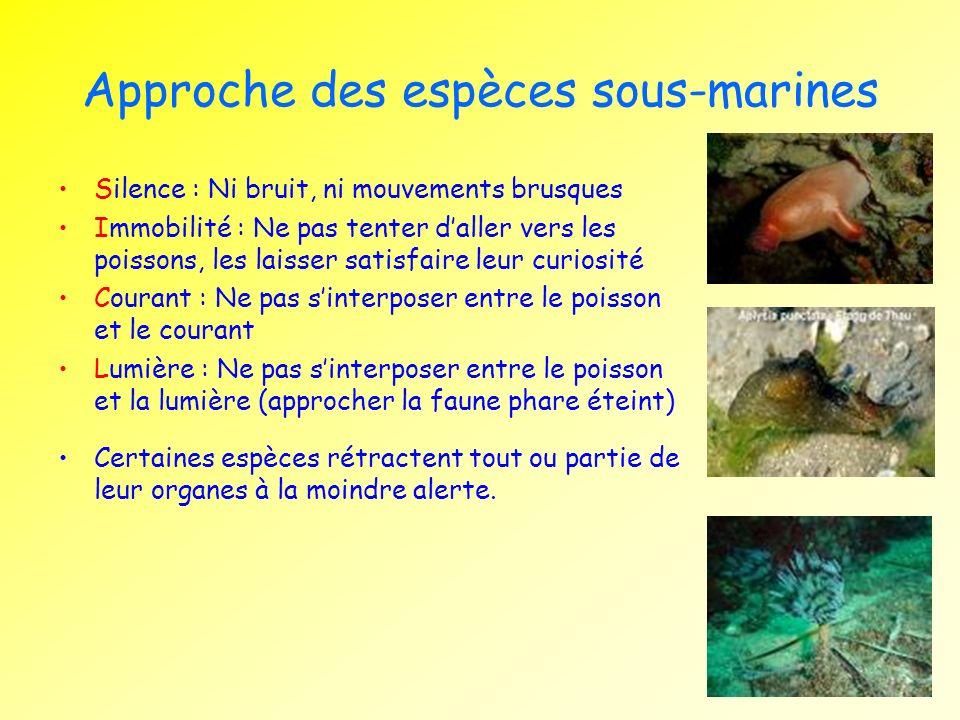 Approche des espèces sous-marines Silence : Ni bruit, ni mouvements brusques Immobilité : Ne pas tenter daller vers les poissons, les laisser satisfai