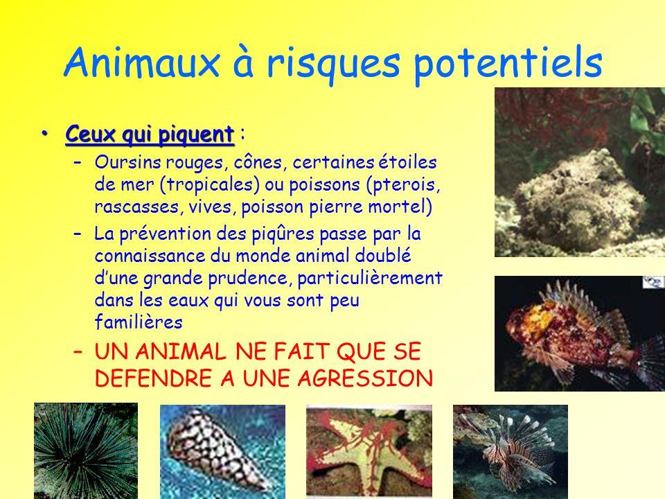 Animaux à risques potentiels Ceux qui piquentCeux qui piquent : –Oursins rouges, cônes, certaines étoiles de mer (tropicales) ou poissons (pterois, ra