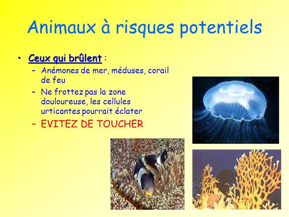 Animaux à risques potentiels Ceux qui brûlentCeux qui brûlent : –Anémones de mer, méduses, corail de feu –Ne frottez pas la zone douloureuse, les cell