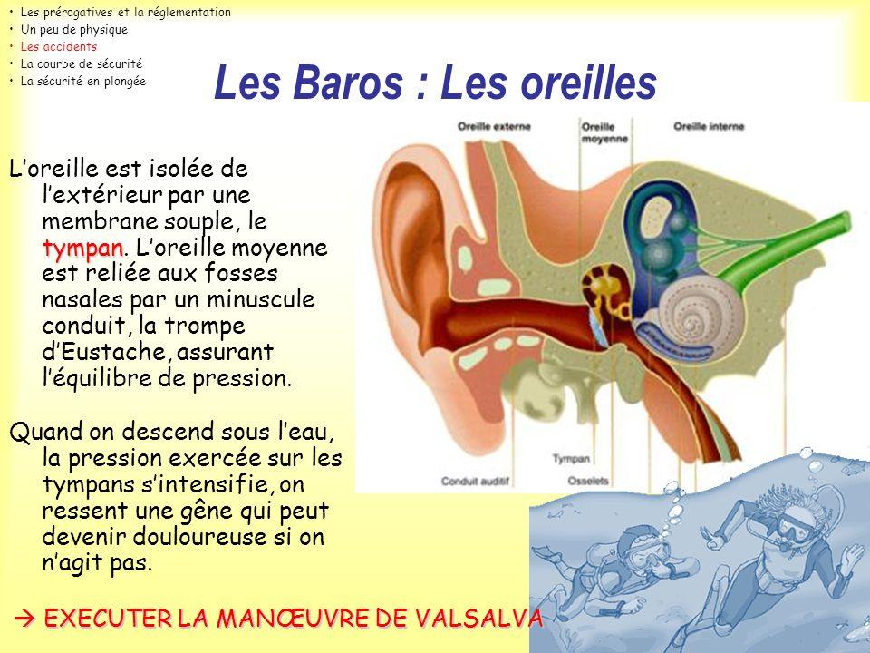 Les Baros : Les oreilles tympan Loreille est isolée de lextérieur par une membrane souple, le tympan. Loreille moyenne est reliée aux fosses nasales p
