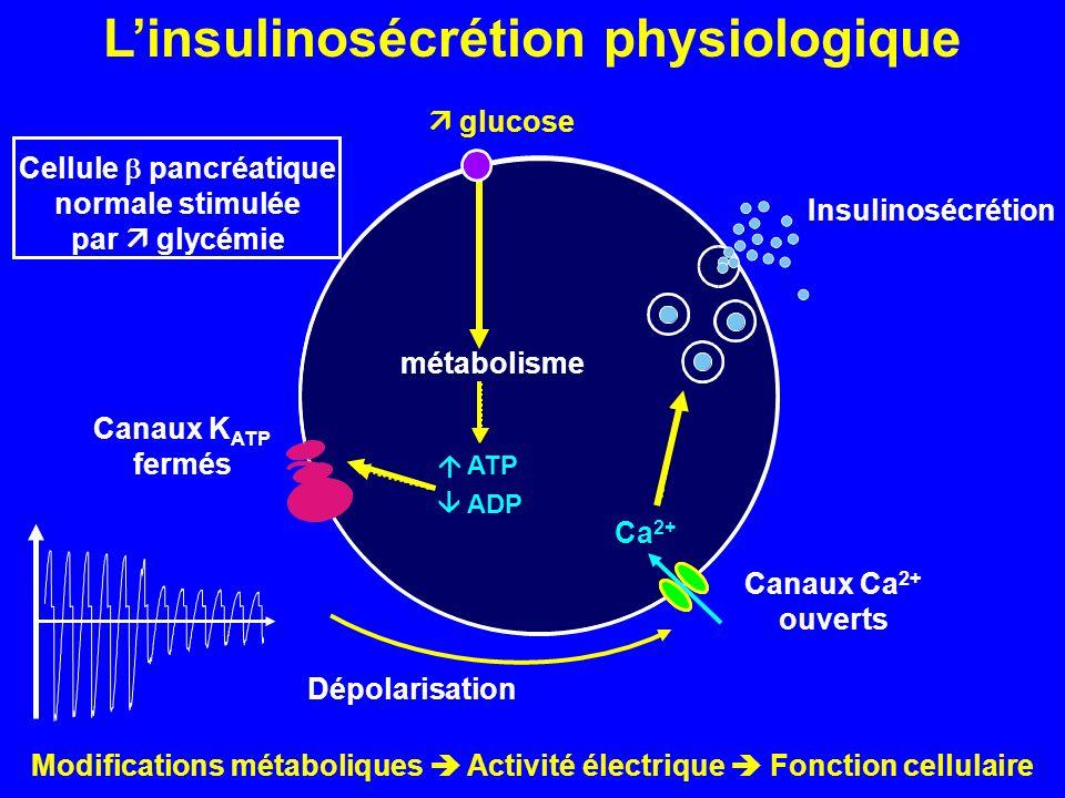 glucose métabolisme ATP ADP Canaux K ATP fermés Dépolarisation Canaux Ca 2+ ouverts Ca 2+ Insulinosécrétion Linsulinosécrétion physiologique Cellule p