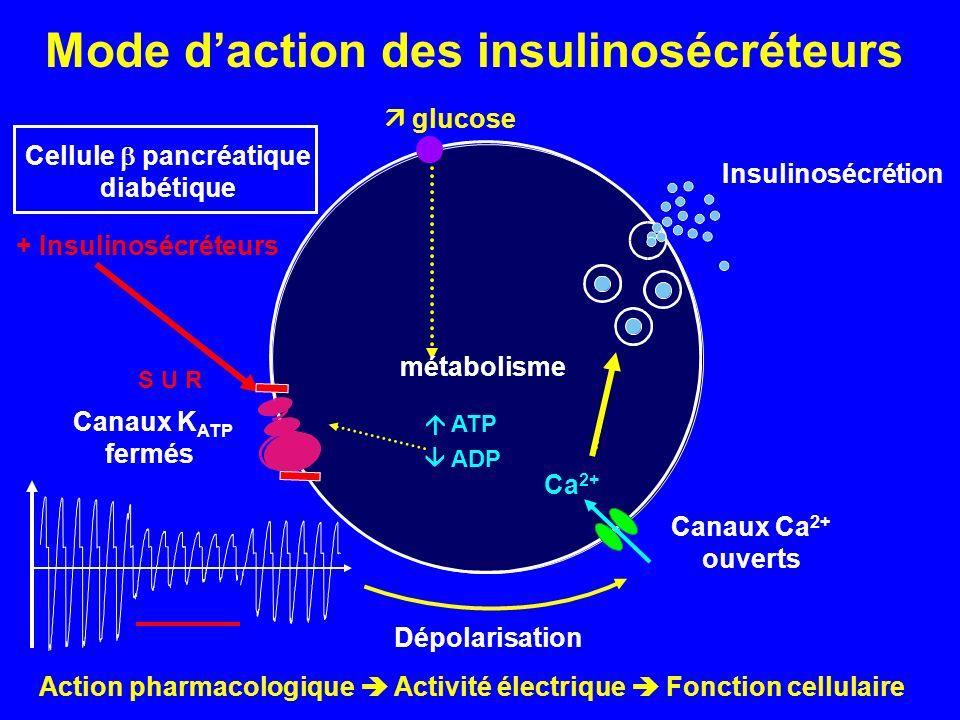 Canaux K ATP fermés Dépolarisation Canaux Ca 2+ ouverts Ca 2+ Insulinosécrétion Action pharmacologique Activité électrique Fonction cellulaire Cellule