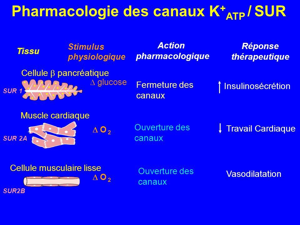 Pharmacologie des canaux K + ATP / SUR Tissu Stimulus physiologique glucose O 2 SUR 1 SUR 2A SUR2B