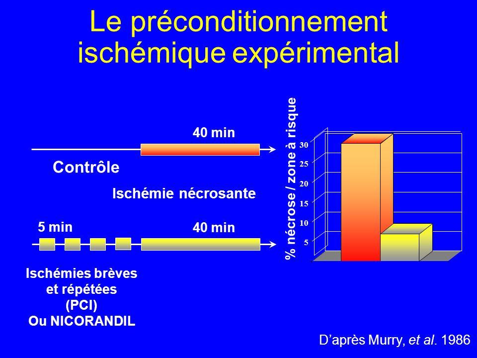 Daprès Murry, et al. 1986 Contrôle Ischémies brèves et répétées (PCI) Ou NICORANDIL 40 min 5 min 40 min 0 5 10 15 20 25 30 % nécrose / zone à risque I