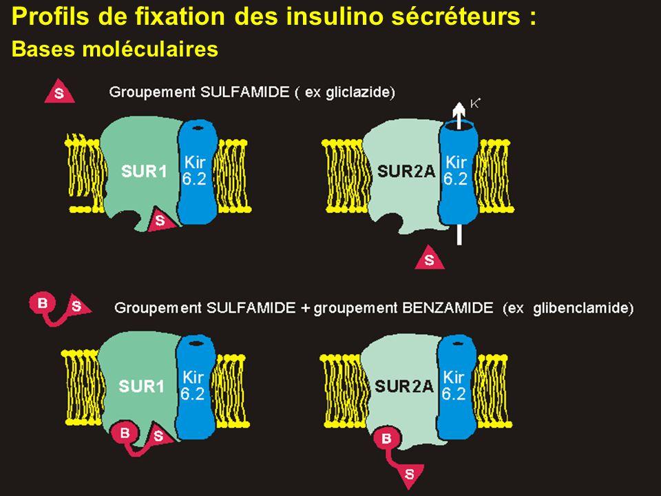 Profils de fixation des insulino sécréteurs : Bases moléculaires