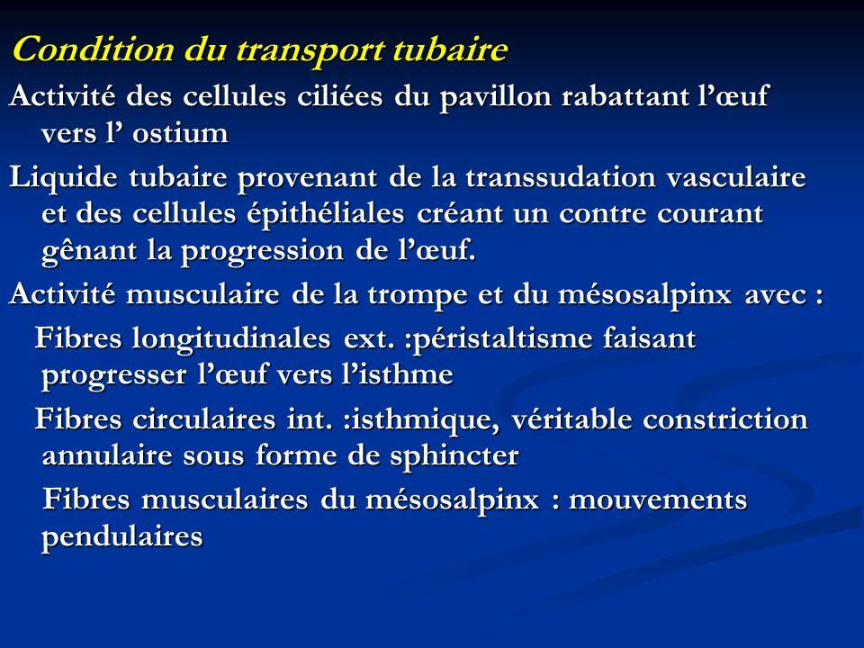 Condition du transport tubaire Activité des cellules ciliées du pavillon rabattant lœuf vers l ostium Liquide tubaire provenant de la transsudation va
