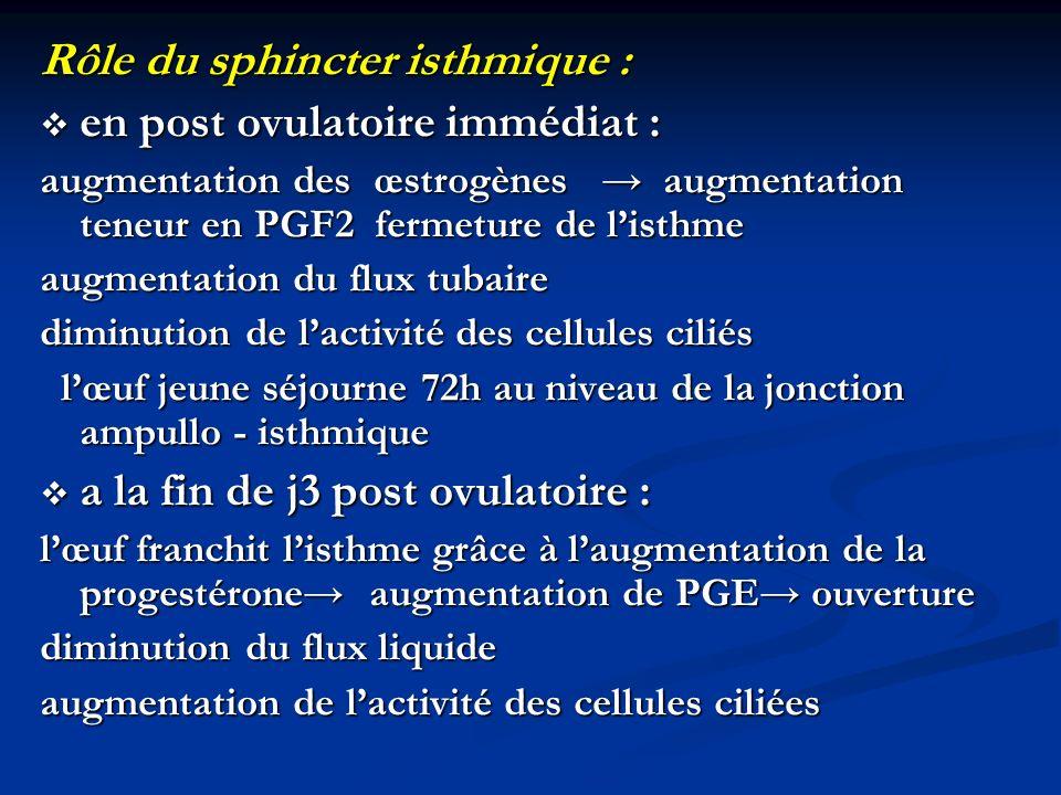 Rôle du sphincter isthmique : en post ovulatoire immédiat : en post ovulatoire immédiat : augmentation des œstrogènes augmentation teneur en PGF2 ferm