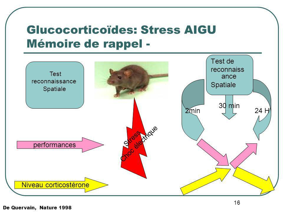 16 Glucocorticoïdes: Stress AIGU Mémoire de rappel - Test reconnaissance Spatiale Stress Choc électrique Test de reconnaiss ance Spatiale 2min24 H 30