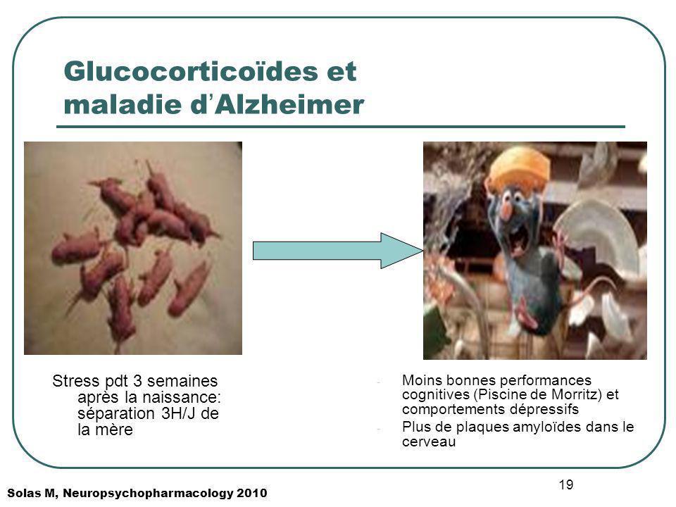 19 Glucocorticoïdes et maladie d Alzheimer Stress pdt 3 semaines après la naissance: séparation 3H/J de la mère - Moins bonnes performances cognitives